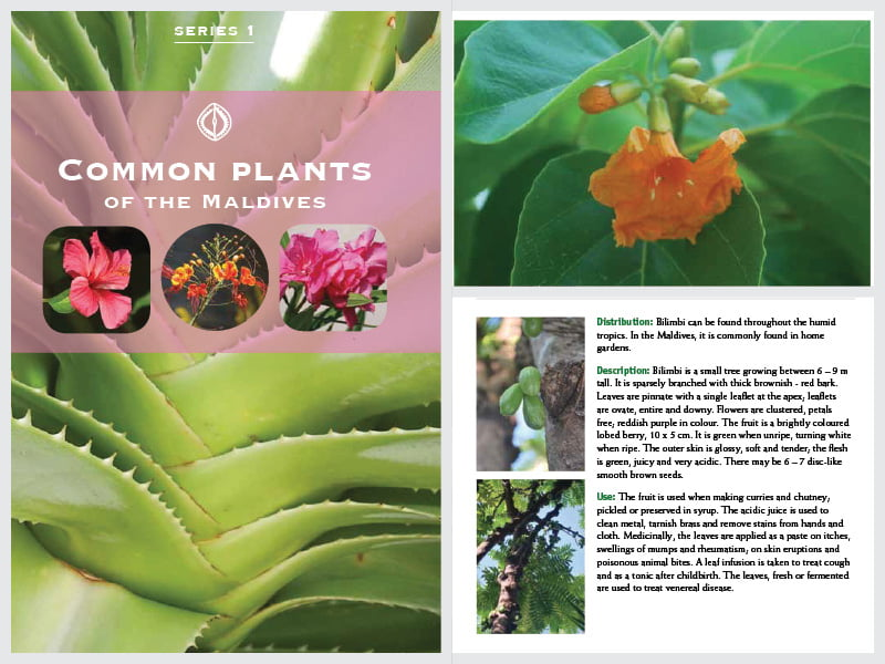 Cover page for the document 'Common Plants of the Maldives'